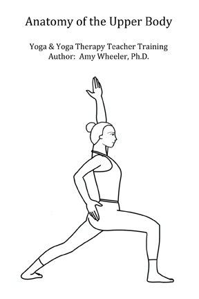 Yogic Anatomy Skeletal Muscular System Of The Upper Body Amy